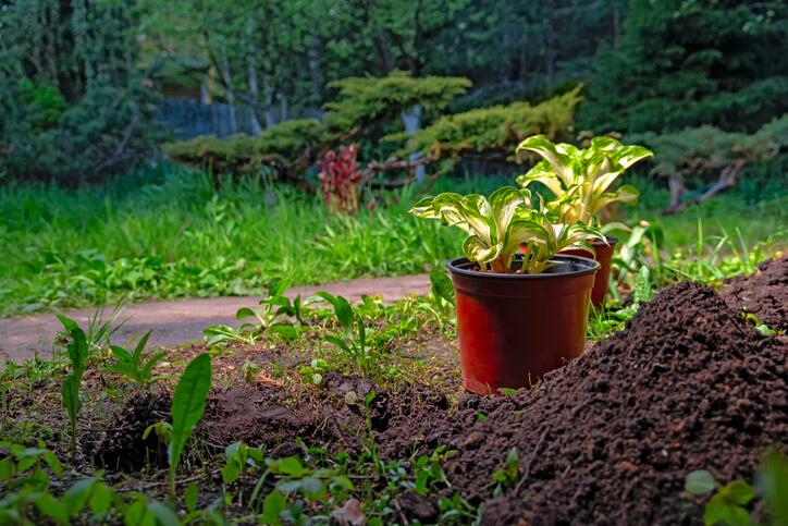 Beet oder Blumenkübel Neuer Standort und Vorbereitungen