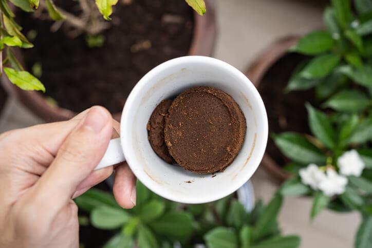 Kaffeesatz gegen Schnecken im Garten