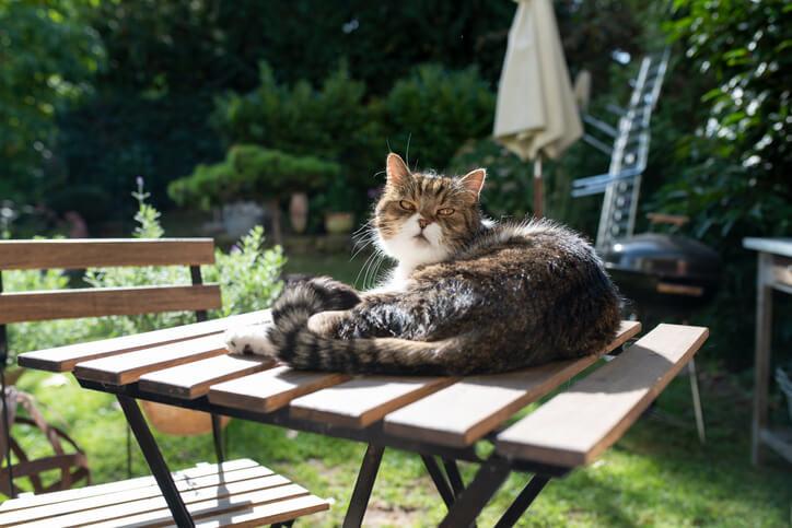Katzen im Garten und auf der Terrasse