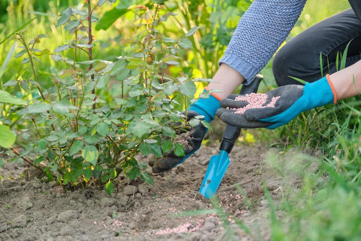 Nährstoffmangel - Hauptnährstoffe und Spurenelemente