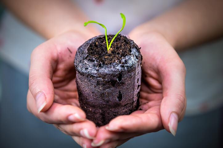 Pflanzen und Aussaat