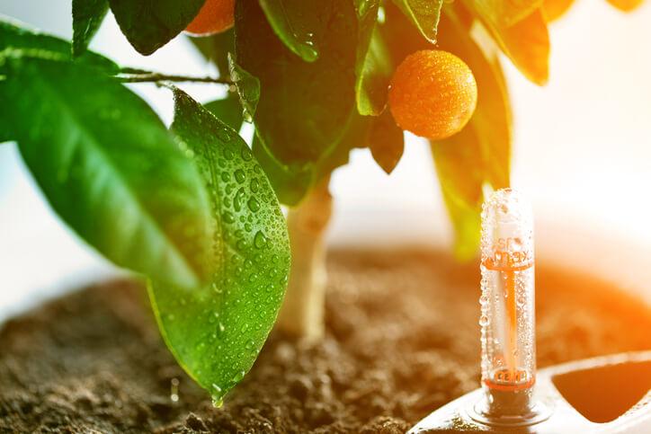 Richtiges Gießen und Düngen für gesunde Blätter