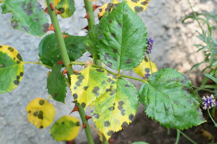 Schädlinge - Erkennung und Bekämpfung