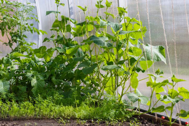 Überwintern und Vermehren