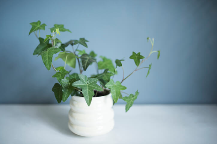 Wie müssen Jungpflanzen gepflegt werden