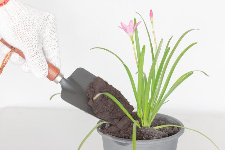 Wie werden Gartenpflanzen mit Kaffeesatz gedüngt