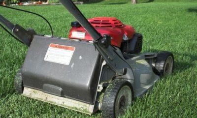 Mulchmäher zum Rasen mulchen - sinnvoll oder nicht