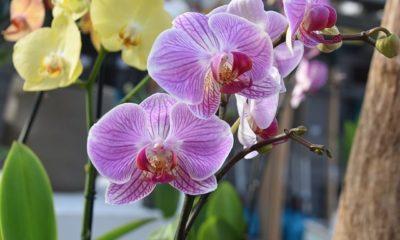 Orchideen überwintern