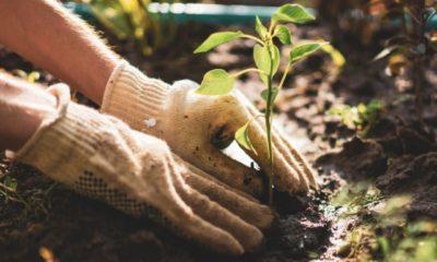 Pflanzen richtig vermehren