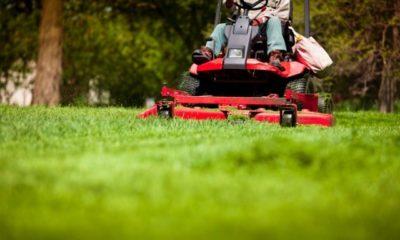 Rasen erneuern ohne umgraben