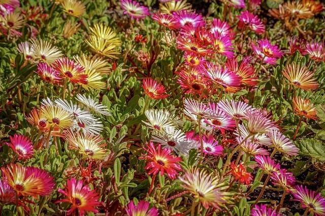 Winterharte Pflanzen im Herbst setzen