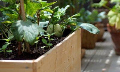 Gemüsebeet auf der Terrasse anlegen - Ratgeber