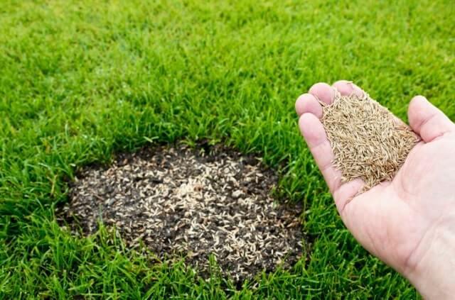 Kahle Stellen im Rasen ausbessern