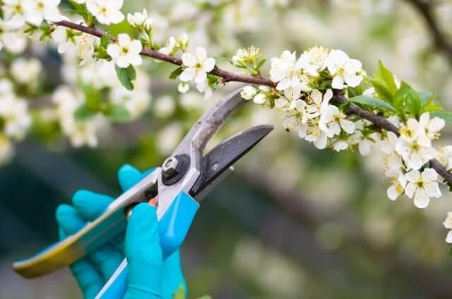 Obstbäume schneiden - So geht man richtig vor