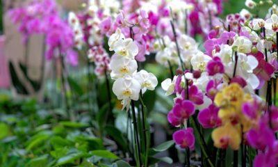 Orchideen richtig schneiden