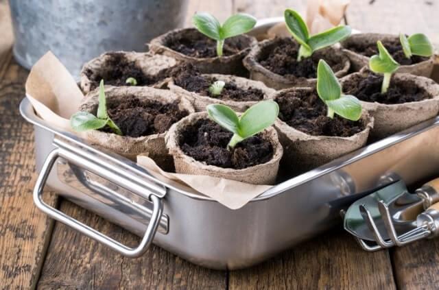Pflanzen über Stecklinge vermehren - Tipps und Tricks zur Anzucht