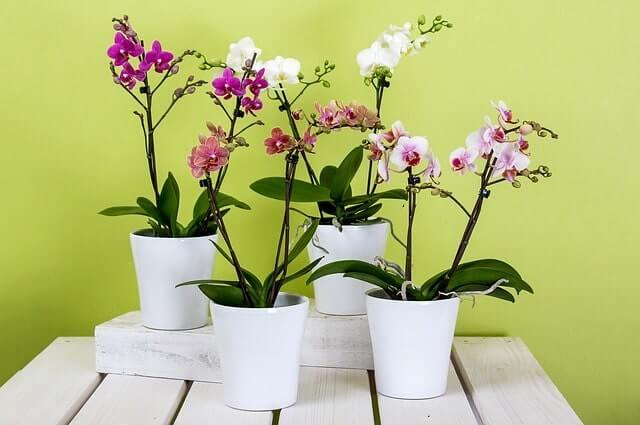 Sind Orchideen im Schlafzimmer gesund Ja oder nein