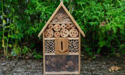 Wann schlüpfen Wildbienen im Insektenhotel