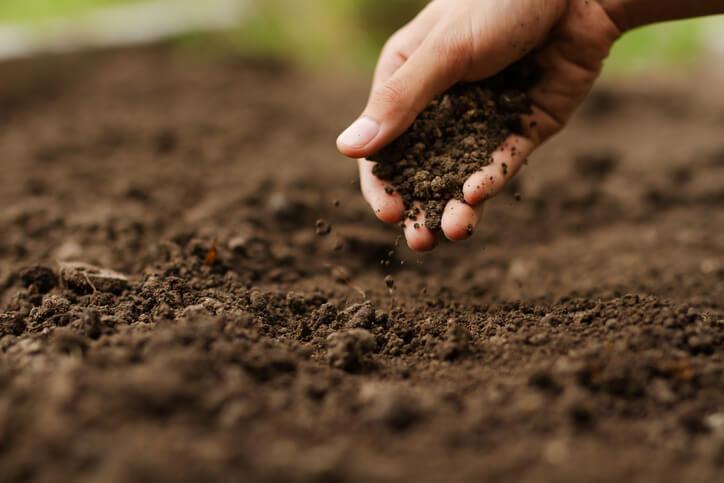 Erde für Gemüsepflanzen