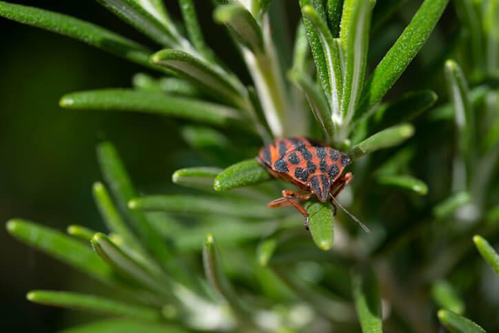 Erkrankungen und Schädlinge bekämpfen