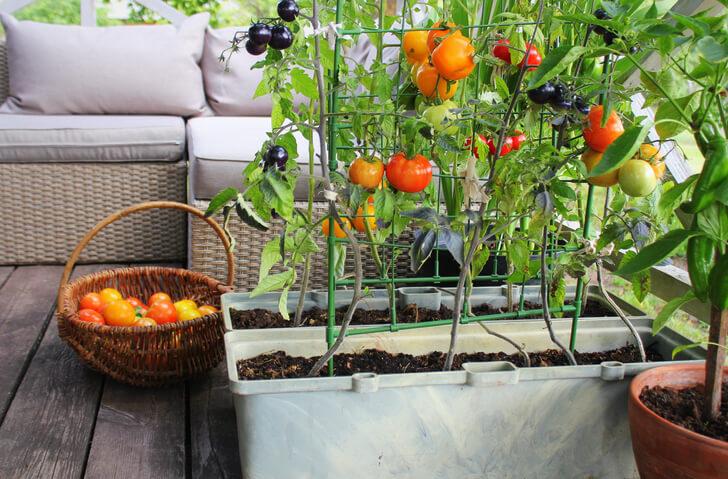 Gemüsebeet auf der Terrasse anlegen - Voraussetzungen