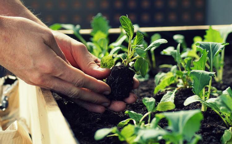 Gemüsebeet in Töpfen und Kübeln anlegen