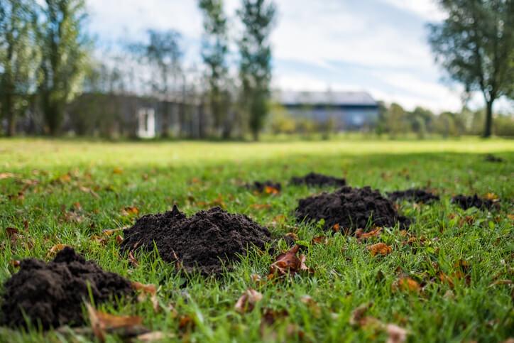 Gründe für kahle Stellen im Rasen