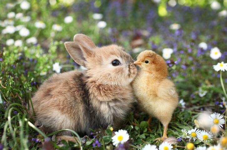 Hühner und andere Tiere