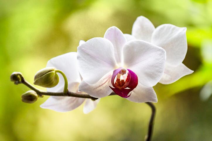 Blütenzyklus