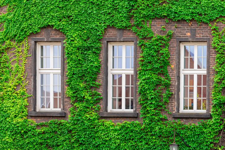 Die besten Efeu-Sorten für die Fassadenbegrünung