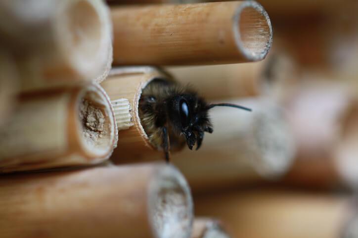 Wann schlüpfen die Wildbienen