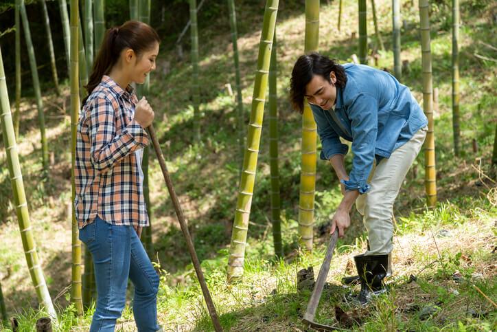Bambus richtig ausgraben