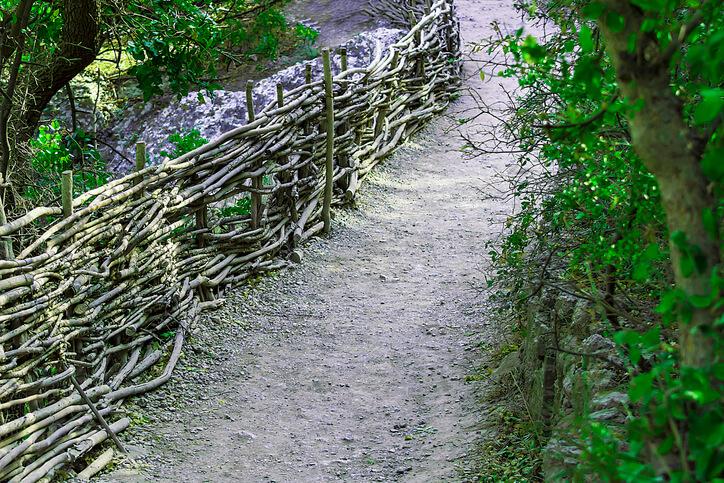 Eine Totholzhecke im eigenen Garten anlegen