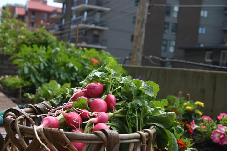 Gemüse und Obst für den Schatten