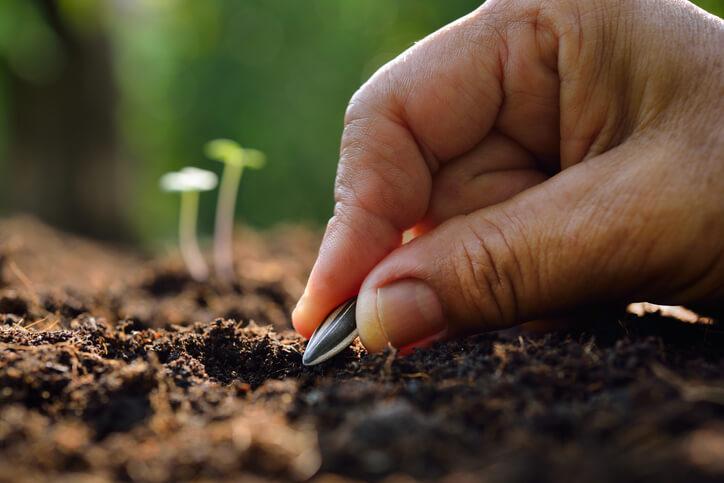 Bodenbeschaffenheit und Nährstoffversorgung