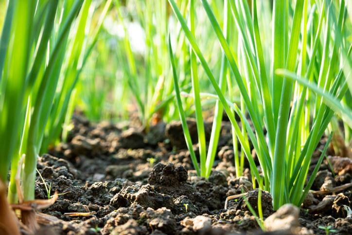 Der ideale Boden