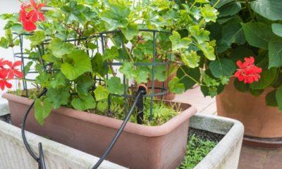 Balkon Bewässerung ohne Wasseranschluss