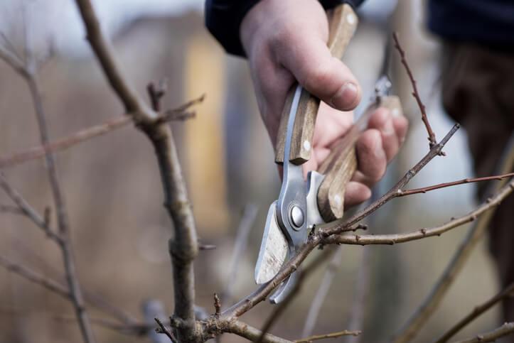 Der richtige Zeitpunkt für den Baumschnitt