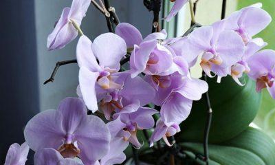 Orchidee bildet viele Luftwurzeln - sollen diese abgeschnitten werden