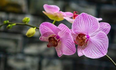 Orchideen - In die Sonne oder in den Schatten