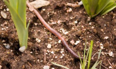Würmer im Blumentopf - was tun