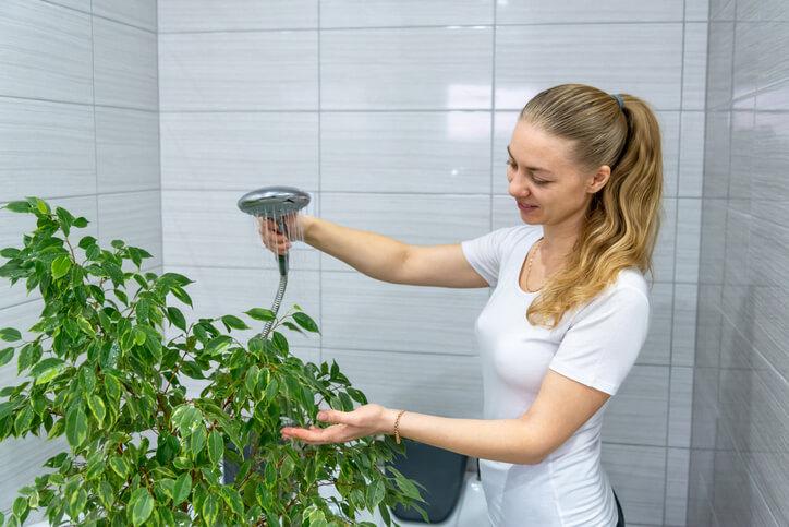 Zimmerpflanzen abduschen