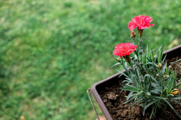 Ein- oder Mehrjährig - Tipps zur Überwinterung