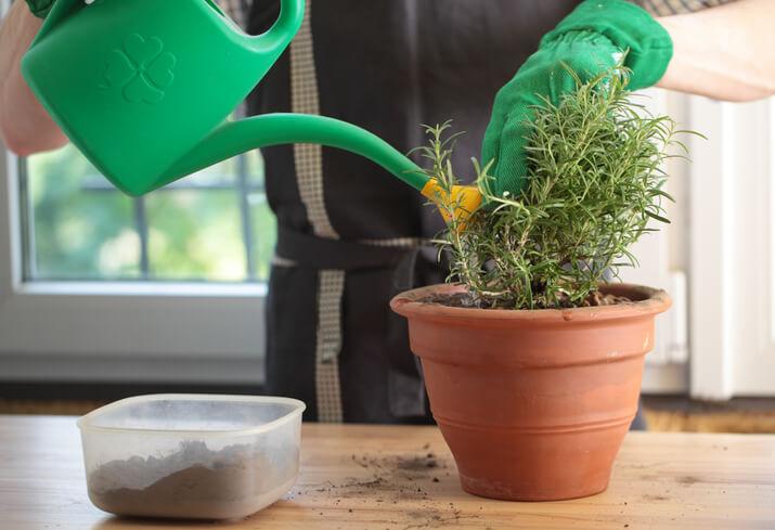 Gießen direkt nach dem Einpflanzen