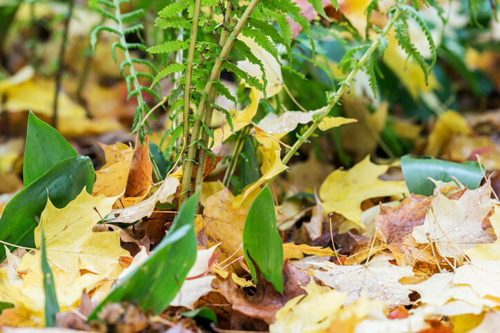 Laub im Garten und auf grünen Flächen