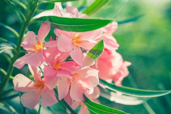 Blüte und Blütezeit
