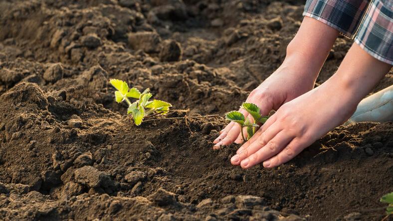 Nährstoffreiche Böden bei Neuanlagen