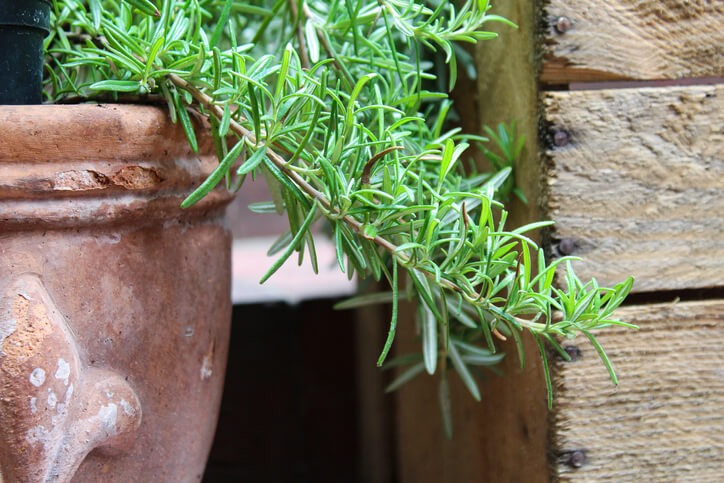 Von Agave bis Zitrus Die Mittelmeer-Terrasse bepflanzen