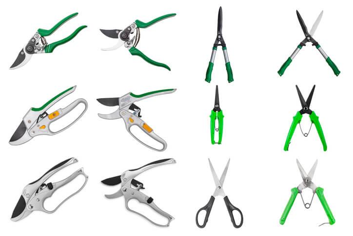 Werkzeug für den Rückschnitt