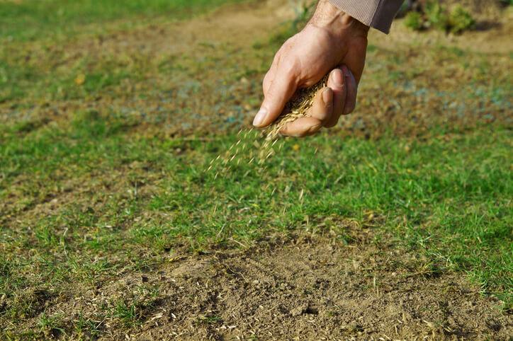 Rasen aussäen